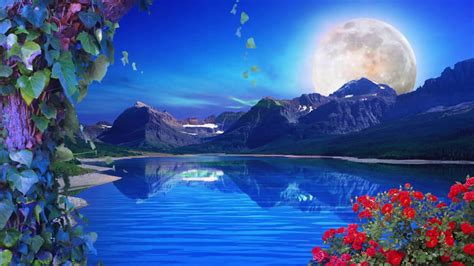 nature backgrounds nature background loop free background hd 60 fps