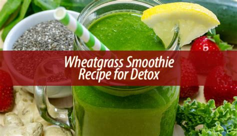 Wheatgrass Powder Detox by Wheatgrass Smoothie Recipes Mloovi