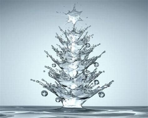 water christmas tree photography pinterest
