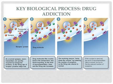 Explain The Prescription Detox Process by The Nervous System Chapter Ppt