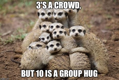 Group Hug Meme - group hug meme 28 images blt bear lion tiger group hug