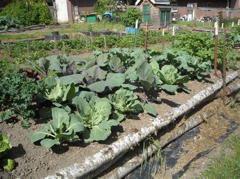 organic vegetable garden soil preparation