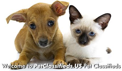 free puppy classified ads free pet classifieds buy and sell pets for sale
