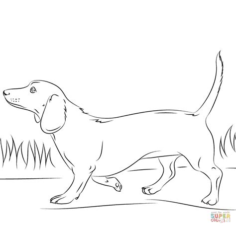 dog coloring pages dachshunds related keywords dog