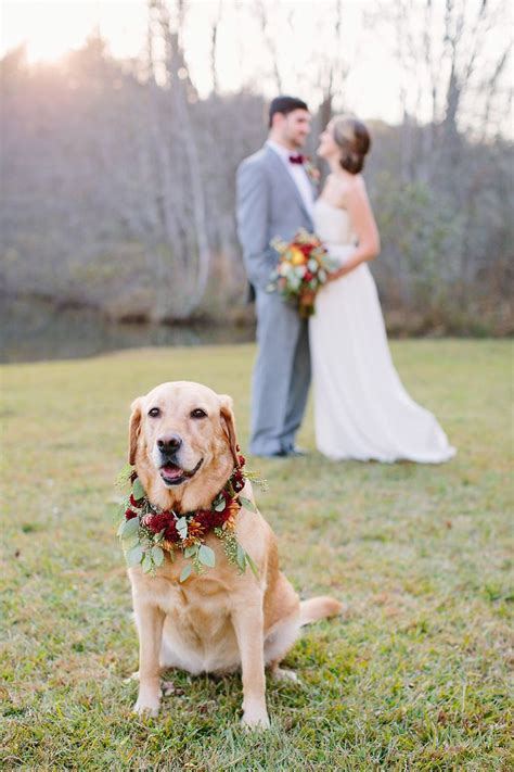 1000  ideas about Dog Wedding Attire on Pinterest