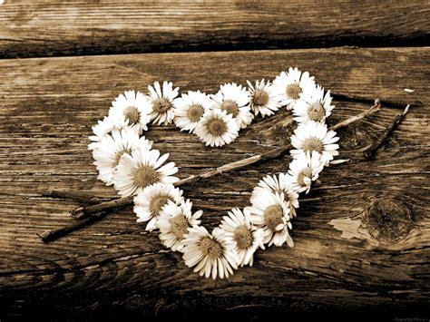 ste a fiori su per te