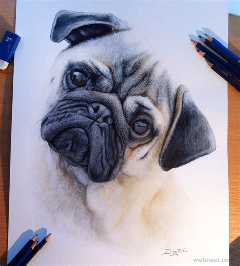 are pug puppies hyper pug drawing dinotomic 22 image