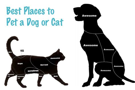 places to pet puppies best places to pet a or cat pets adviser