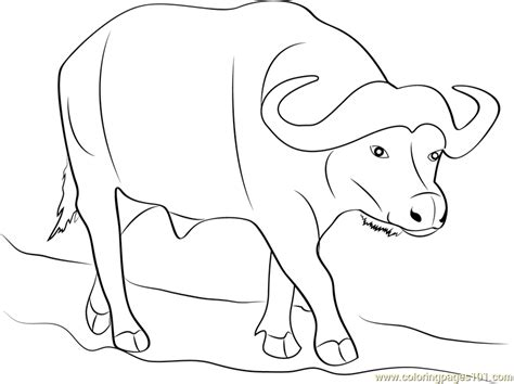 wild buffalo coloring page free buffalo coloring pages
