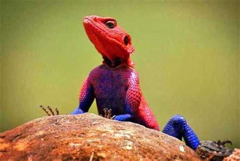 Jual Buku Seri Tokoh Dunia Kaskus 10 hewan dengan warna dan corak tidak biasa 13 03 basir