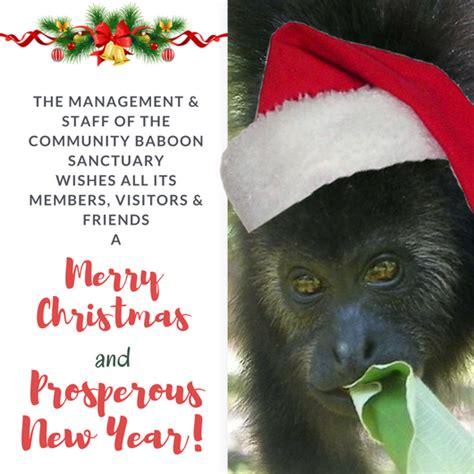 community baboon sanctuary home facebook