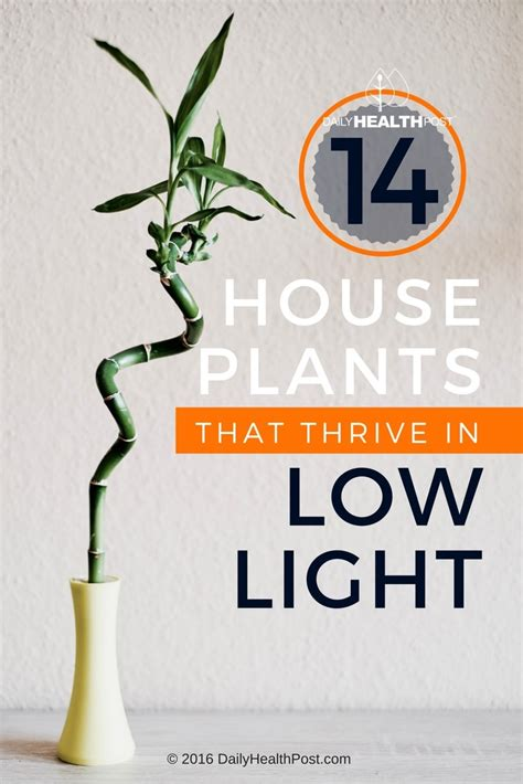 plants that thrive in low light 14 best low light house plants to grow at home