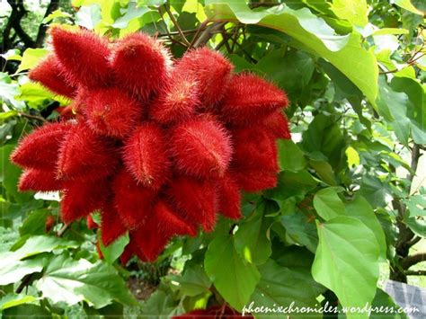17 Best Images About Unusual Flowers And Plants On Soares Flower Garden Nursery