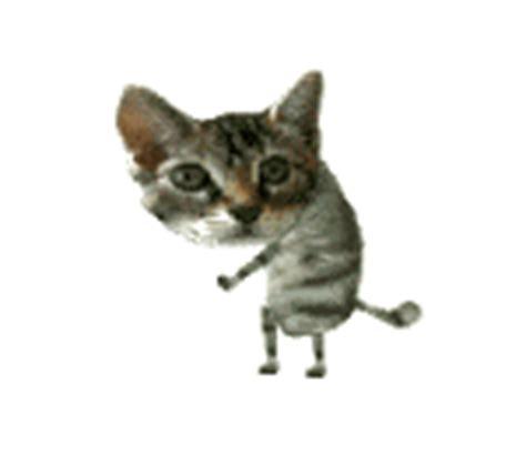 imagenes graciosas animadas gif gifs animados de gatos graciosos para compartir con tus