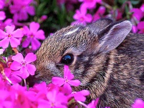 Purple Rabbit rabbit smelling purple flowers wallpaper free beautiful