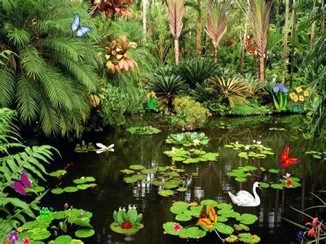 butterflies ponds  butterflies screensaver