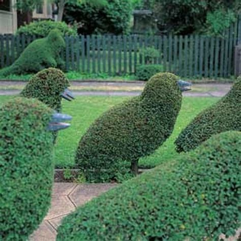 how to trim a topiary topiary design in animal shapes