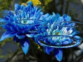 gifs animados metodos anticonceptivos narturales imagenes con movimiento de flores azules con agua