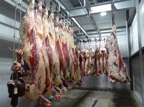 slaughter house cow slaughterhouse www pixshark com images galleries