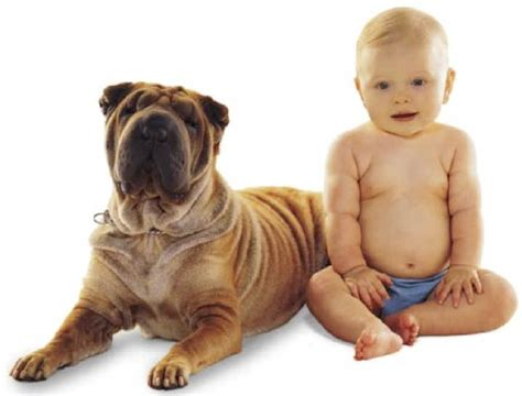 dogs that are with children who look like their dogs wrinkles from all creatures org humor archive