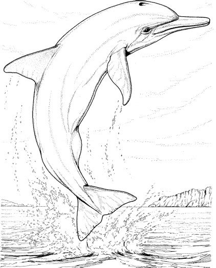 coloring page bottlenose dolphin realistic dolphin coloring pages for adults enjoy