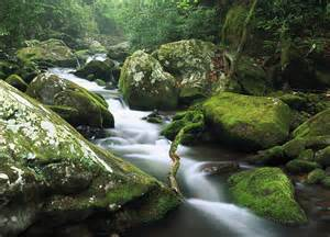 Roaring Fork Roaring Fork River Photograph By Tim Fitzharris