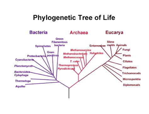 what are some exles of domain archaea socratic
