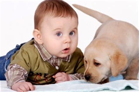chion candele un chien et l arriv 233 e de b 233 b 233
