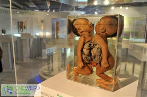 8 Wacky Museums From Around The World by 13 Museums Around The World Hookedupon