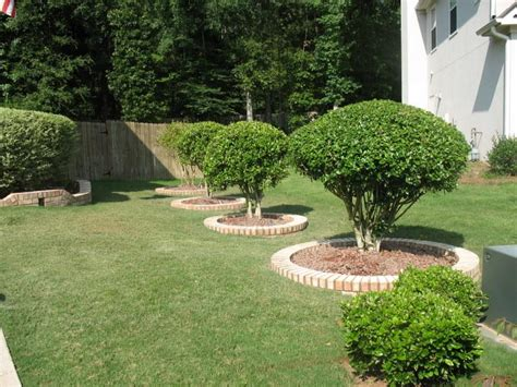 flower beds around trees tree flower bed crowdbuild for