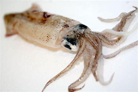 perossido di idrogeno alimentare molluschi sbiancati con acqua ossigenata e bufera in