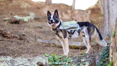 backpack for dogs to wear how to your to wear a backpack mnn nature network