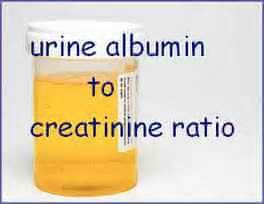 creatinine urine urine albumin to creatinine ratio acr laboratorytests net