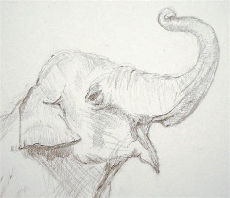easy pencil drawings an elephant a day elephant no 317 pencil drawing