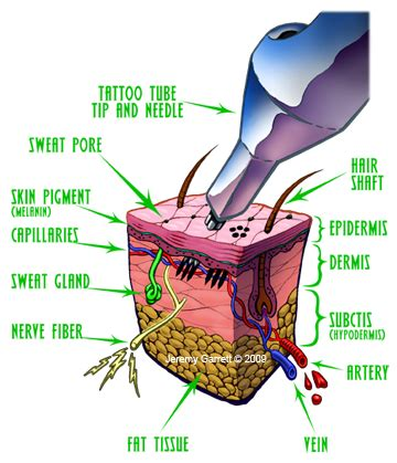 how tattoo process works tattooing process
