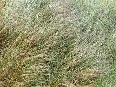 Soft Grass free stock photo 4321 soft grass texture freeimageslive