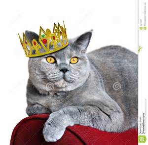 Golden Power Chair Queen Of Cats Royalty Free Stock Photography Image 23210997