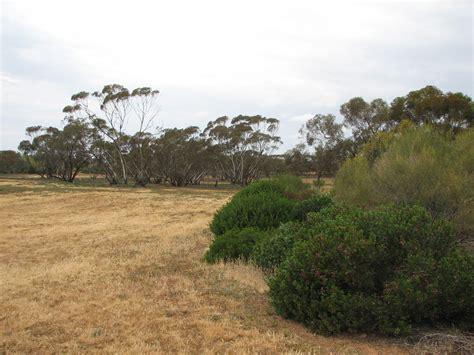 Australian Inland Botanic Gardens Australian Inland Botanic Gardens Trevor S Travels