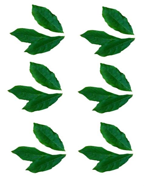 printable green leaves free the leaf is green coloring pages