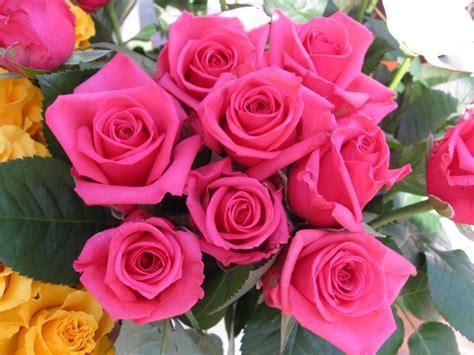 imagenes rosas fondos de rosas fondos de pantalla de rosas flores