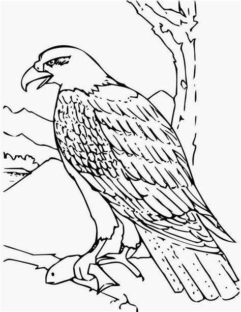 states of matter coloring pages az coloring pages