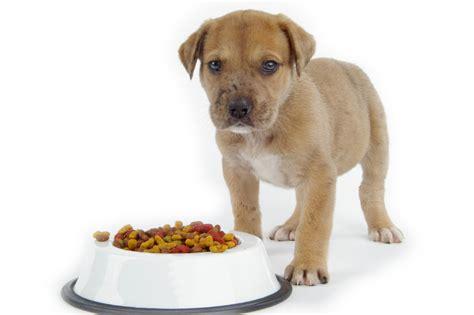 alimentazione casalinga dieta casalinga per cani casa e gatto