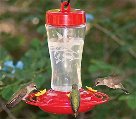 hummingbird feeder buying guide bird feeders and houses
