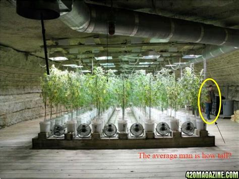 underground grow room the great tennessee pot cave pics