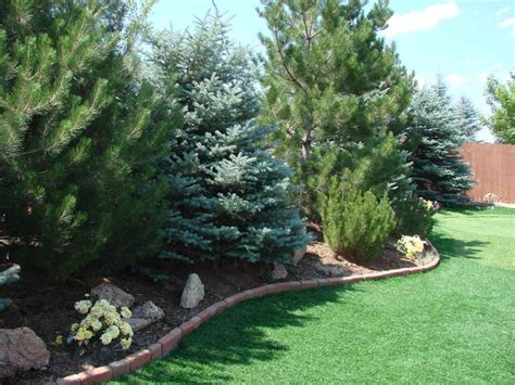 Privacy Trees For Backyard by Best 25 Privacy Trees Ideas On Privacy