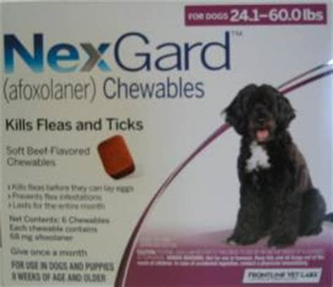 nexgard chewables for dogs nexgard a new fda approved chewable to combat fleas and ticks on your
