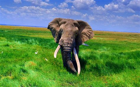 elephant wallpaper for laptop wallpaper african elephant wallpapers