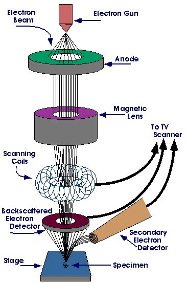 diagram of electron microscope scanning electron microscope enfo