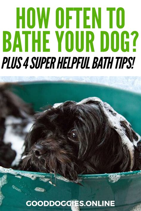 how often should you give your a bath so this is how often to bathe a doggies