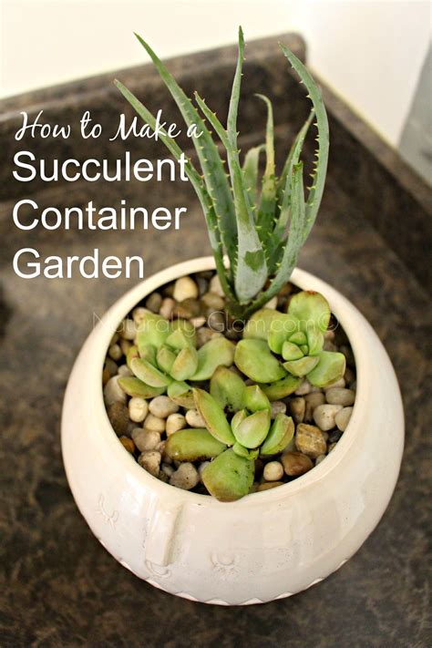 how to make a succulent container garden how to make a succulent container garden naturally glam